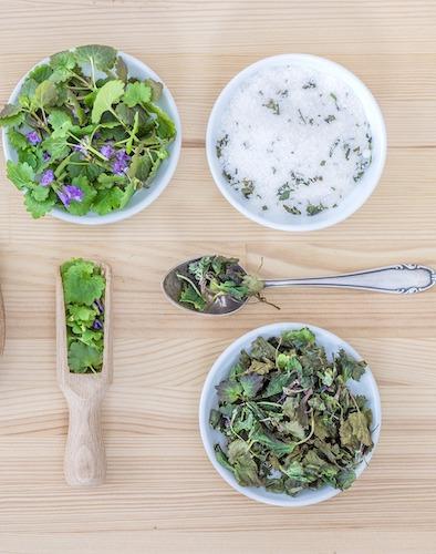 herbes bio de cuisine