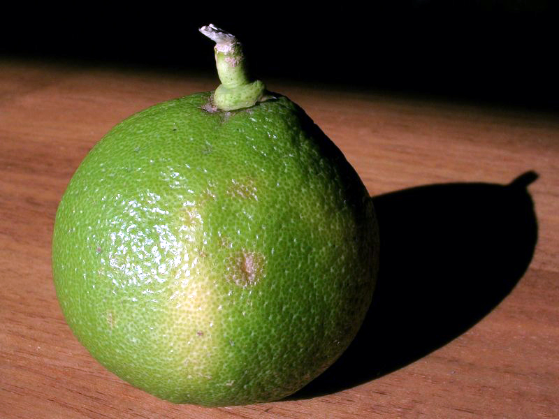 fruit du bergamotier