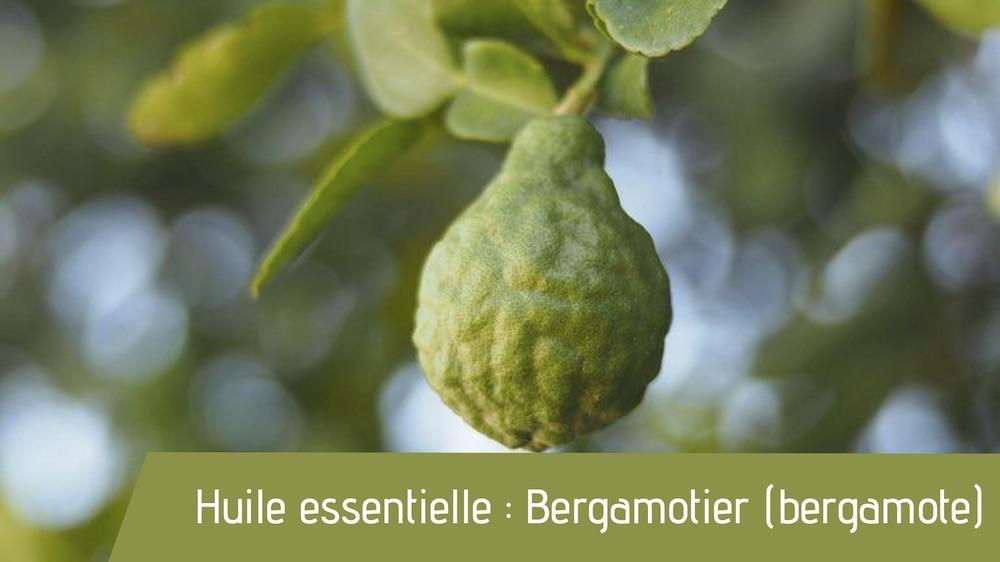 Huile essentielle : Bergamotier